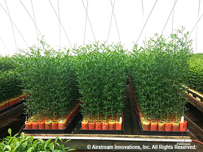 Medical Cans Growers Follow Citrus Nurseries In Choosing Airstream Greenhouses