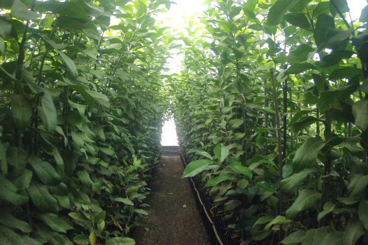 Citrus Growing Operation